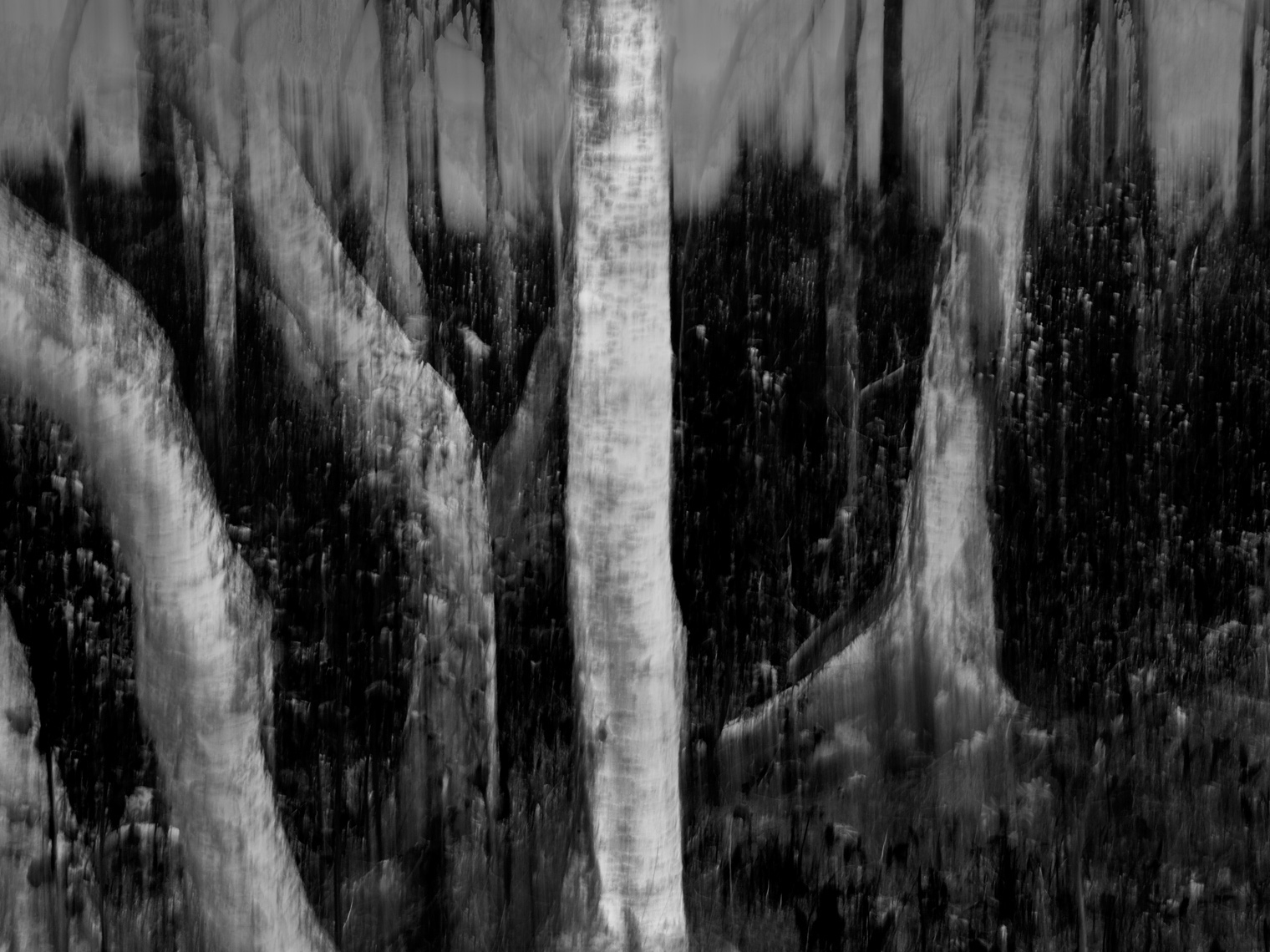 Grey Forest by Photographer Aki-Pekka Sinikoski